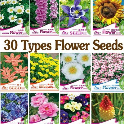 FIND YOUR LOVING SEEDS! Free shipping 30 types various plant B0002 can be choosen / 5 packs/lot wonderful garden flower B0002