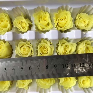 Image 5 - 2CM/24PCS,Grade B Mini Preserved Rose Head,Beauty And The Beast Forever Rose,Eternal Rose For Valentines Gift,Wedding Decoration