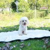Waterproof Pet Mat For Dog Cat Indoor Outdoor Lawn Travel Mat For Pets Dogs Cats Portable