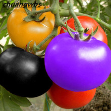 100pcs/bag rainbow tomato, rare tomato plants bonsai organic vegetable & fruit,potted plant for home &garden