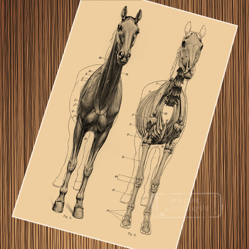 Vintage Anatomy of Horse Map Skeleton Poster Canvas Painting DIY ...