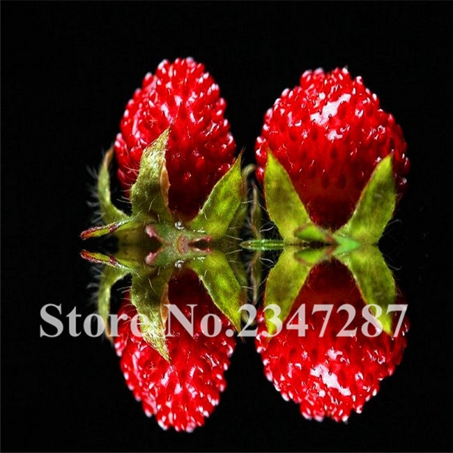 top 10 fruit trees india brands and get free shipping - ei5k04id