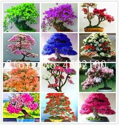 Лидер продаж! 50 шт. японский Азалия карликовые деревья, красочные Рододендрон Азалия, Крытый цветок дерево бонсай крышка Flore Diy растение для