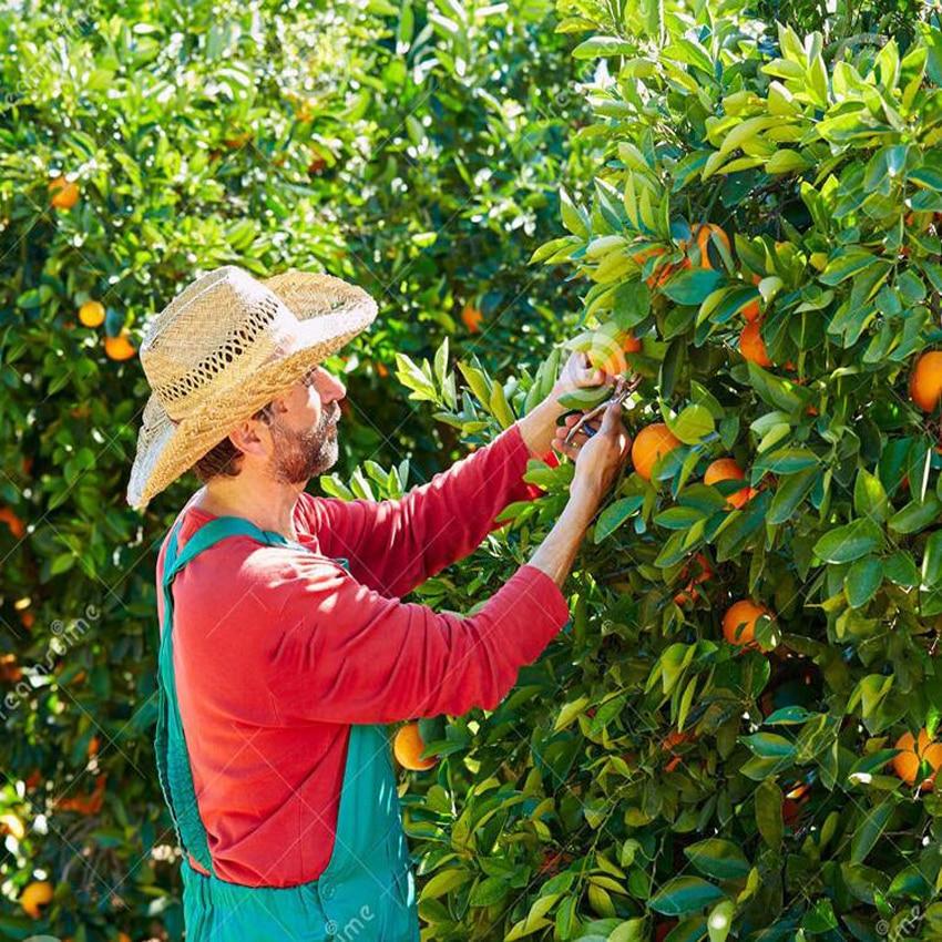 forbici arancioni di alta qualità piccole forbici da frutta per - Attrezzi da giardinaggio - Fotografia 4