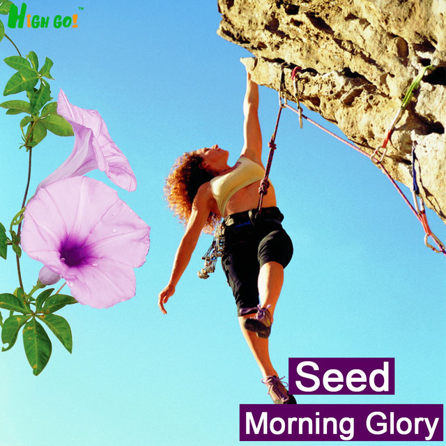 Free Shipping!!!!!!climbing Petunia,flower Seeds,decoration Garden, Supplies,30pcs Plants