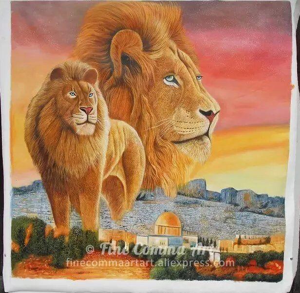 Lion_11