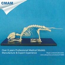 CMAM-A16 Anatomical Rabbit Skeleton / Life Size Hare Plastic Model – Medical Veterinary Anatomy,Animal Skeleton Model