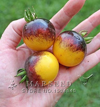 Free Shipping ,Big Promotion 25 Tomato Seeds–Bumble Bee Heirloom Tomato Seed, real seeds