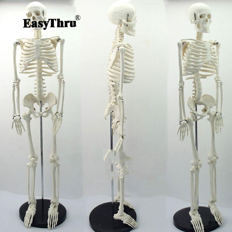 Médico estándar anatomía 85 cm Cuerpo Humano esqueleto modelo manikin Hi Q médico esqueleto-in Ciencia médica from Suministros de oficina y escuela    1