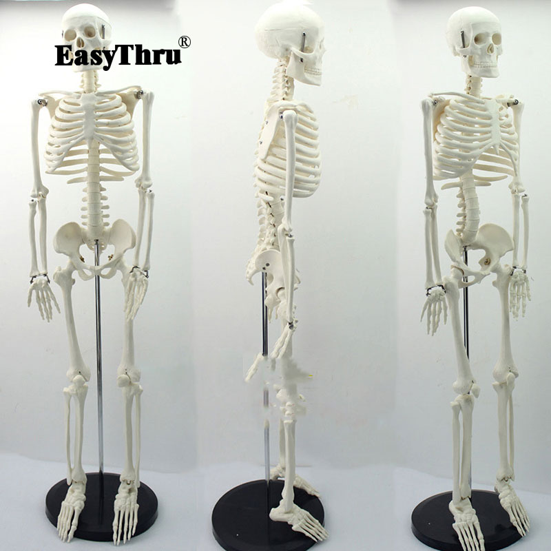 Medical Standard Anatomy 85cm Human Body Skeleton Model Manikin Hi-Q Medical Esqueleto