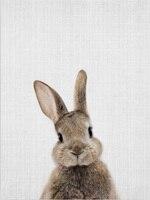 Rabbit-14