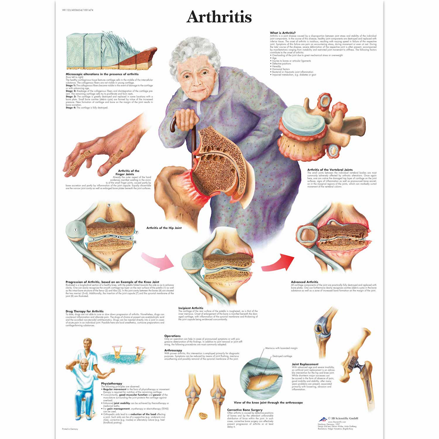 Medical Anatomy Anatomical The Vascular System Chart Classic Canvas ...