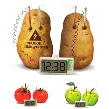 free shipping Potato Clock Novel Green Science Project Experiment Kit kids Lab Home School font b