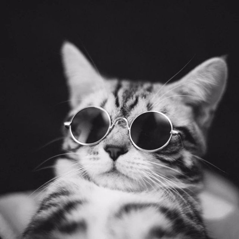 2020 Fashion Small Pet Dogs Cat Sunglasses Cool Eye Wear Protection Pet Glasses Round Frame Wedding Party Funny Glasses From Starch 22 38 Dhgate Com,Hacks Space Saving Ideas For Small Apartments