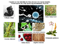 TCM Fórmula para Curar La Infertilidad Masculina, aumento Semen Inseminación Tasa de Éxito, extender Vida Útil de Espermatozoides en La Vagina
