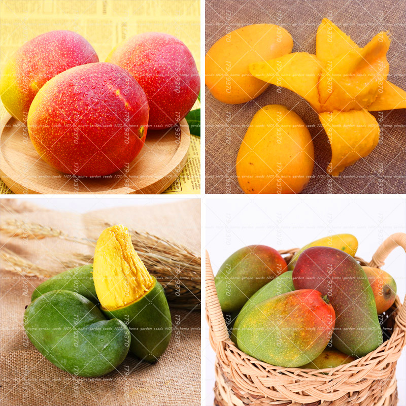 2PCS Different Color Mango Seeds Tree Seeds Very Delicious Fruit Seeds For Home Garden Rare Potted Plants