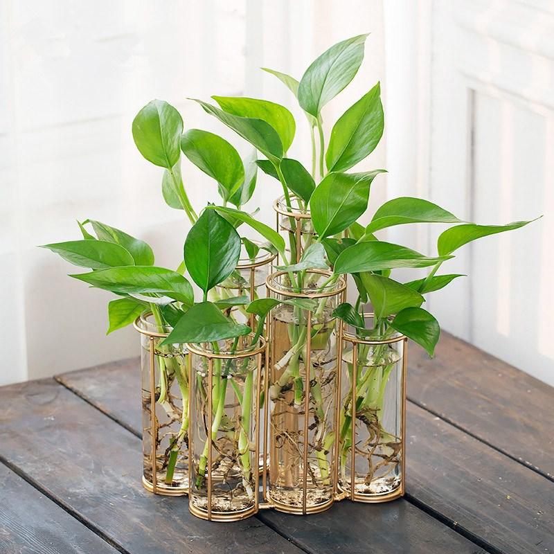 Creative DIY Vase Flower Plants Green Daffodil Flower Home Decor Hydroponic Green Plant Container European Table Tubular Vase
