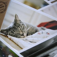 Random-Postcard Birthday-Card Gift Cat Cute No Animal-Style Novelty Creative 28pcs/Pack