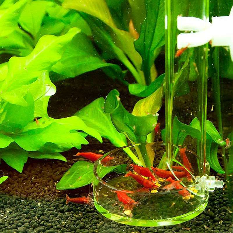 Red bee shrimp feeder long tube bottom fish arcylic for Bottom feeder fish list