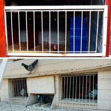 Голубь двери металлические провода бары рамки вход ловушка дверные рамы Лофт животных принадлежности для птиц ловить бар запись шторы птица интимные аксессуары