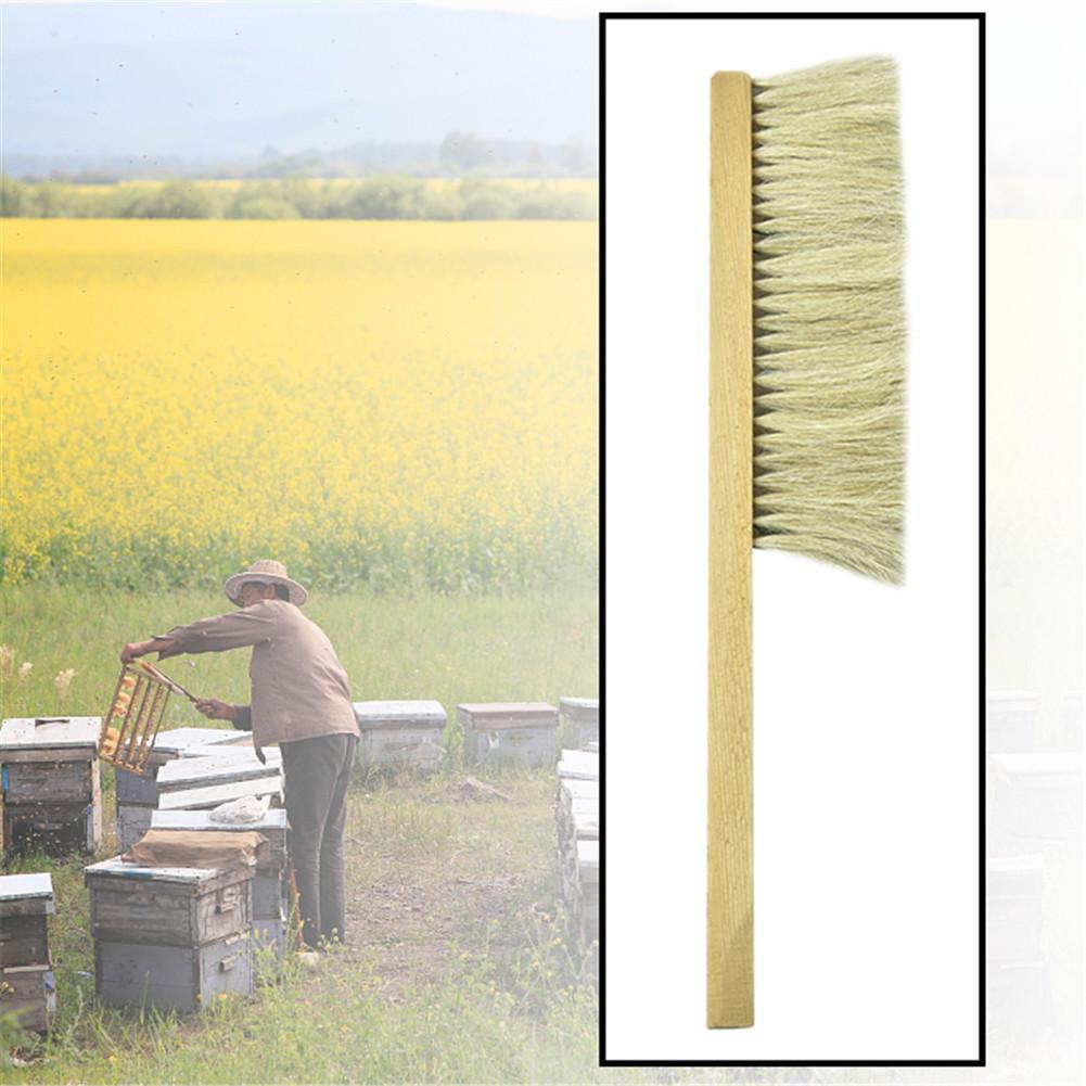 Image 4 - Инструменты для пчеловодства деревянная ОСА щетка сметка два ряда волосы конского хвоста новая пчелиная щетка оборудование для пчеловодства-in Инструменты для пчеловодства from Дом и животные