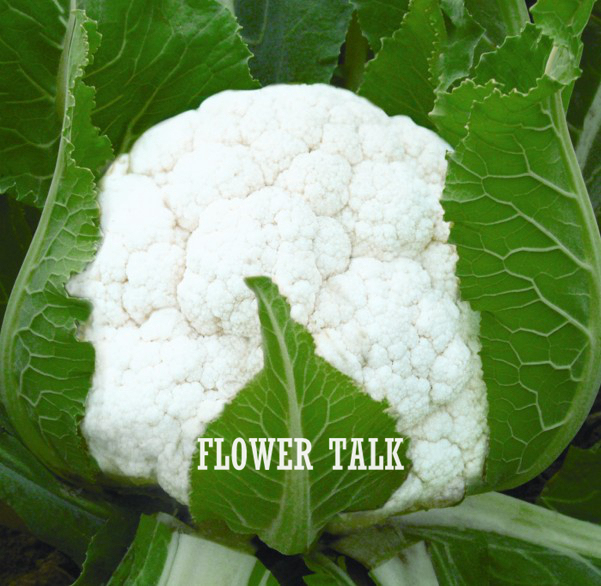 White flower vegetable image collections flower decoration ideas white flower vegetable image collections flower decoration ideas white flower vegetable images flower decoration ideas white mightylinksfo
