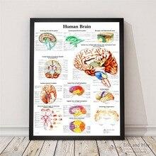 Анатомия человеческого тела плакаты с системой и художественная печать на холсте живопись настенные картины для украшения гостиной домашний Декор без рамки