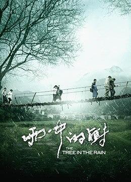 《雨中的树》2012年中国大陆剧情电影在线观看