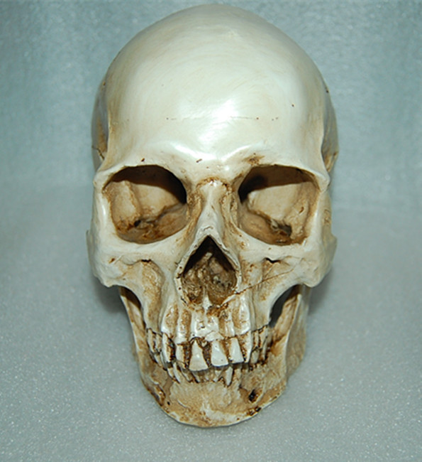 US $20 42 5% OFF|1:1 REAL LIFE SIZE Human skull 20X15X11 5CM resin  Specializing in the production of the skull skull must Medical skeleton  model-in