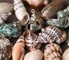 Mix Style Shell Charm Pendants Conch Sea Snail 3cm X 2 1cm 3 1cm X 3