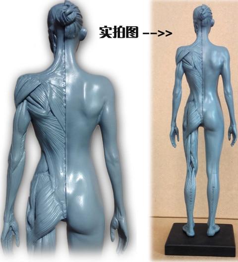 SHUNZAOR 30cm Människa Kvinna Modell Anatomi Skalle Huvud Muskelben - Skola och pedagogiska förnödenheter - Foto 2