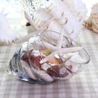 New Conch Fish Tank European Fashion Glass Vase Hydroponic Flower Vase Transparent Vase Wedding Decoration Creative