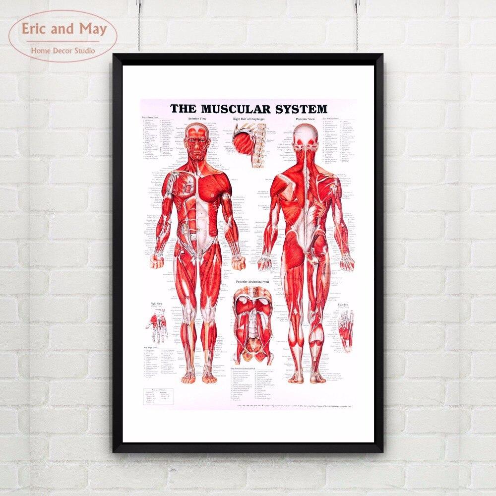 Wunderbar Körpersystem Bilder Fotos - Anatomie Von Menschlichen ...