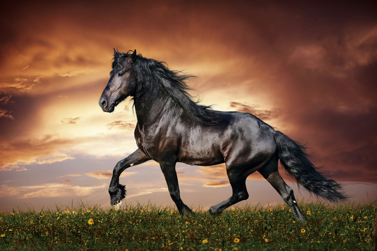 horse running sunset field grass flowers wild nature animal KB077 living room home wall art decor wood frame fabric posters