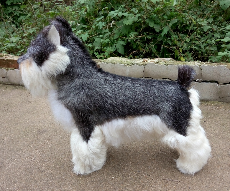 Nouvelle simulation Schnauzer jouet résine & fourrure gris chien modèle cadeau 47x42 cm 1023