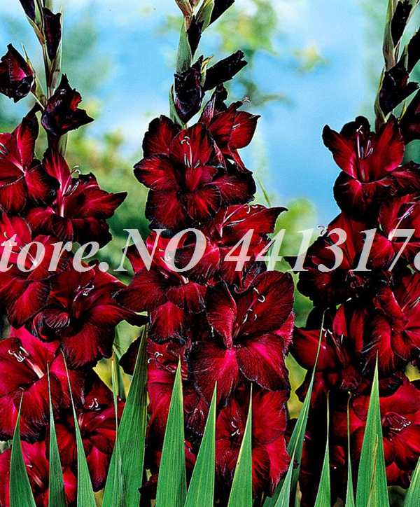 13825-00-BAKI_20120427164400