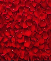 wall backdrop Vinyl cloth High quality Computer print Beautiful Red Rose Petals background