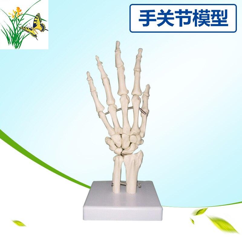 PVC 1:1 Life Size Human Hand Joint Bone Ulna Tibial Model Human Medical Skeleton Palm ModelPVC 1:1 Life Size Human Hand Joint Bone Ulna Tibial Model Human Medical Skeleton Palm Model