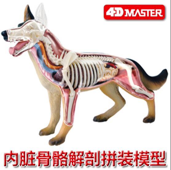 4D Master Black Back Dog Visceral Bone Anatomy Group Assembled Model