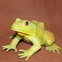 pvc figure Amphibian plastic ornaments adult frog bullfrog