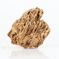 Natural raw stone Paleontological fossil landscaping rockery aquarium decoration bonsai Water grass Plant root growth adsorption