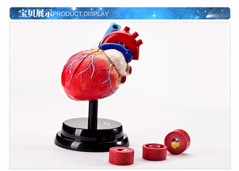 science Human Medicine physiological Dissection heart structure model Respiratory system free shipping