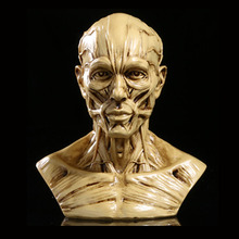 2018 Hot Sale New Arrival Mrzoot Resin Craft Art Painting Statues For Model Replica Decoration Skull Home Accessories Medical