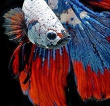 50x50cm Diy Diamond Painting Colored Fish Dancing Embroidery Cross Stitch Animals Rhinestone Mosaic Paintings