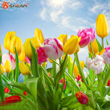 Tulip Seeds Beautiful Flower Tulips Flower Plants 24 Varieties Can Pick  100 Particles / lot