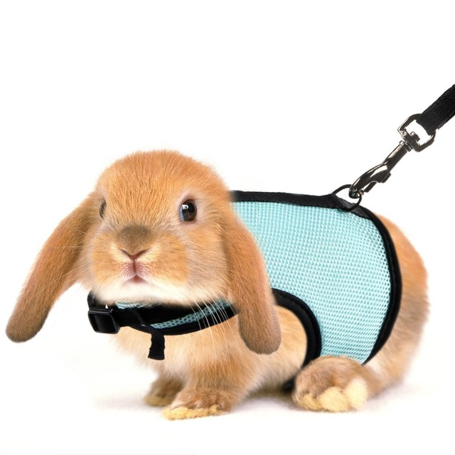 Janpet rabbits harness with elastic leash for small animal janpet rabbits harness with elastic leash for small animal adjustable soft pet walking lead hamster ferret publicscrutiny Gallery
