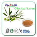 Natural Súper Antioxidante 3%-20% Hidroxitirosol, 20%-70% Oleuropeína, Extracto de Hoja de olivo