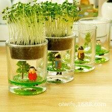 Desktop potted plant ecology fairy cup bottle micro landscape ecology grass lazy creative pot zakka plant