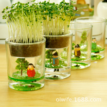 Desktop potted plant ecology fairy cup bottle micro landscape ecology grass lazy creative pot zakka plant