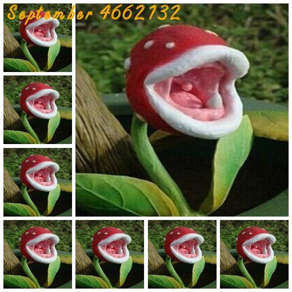 100Pcs Insect Catching Succulent Plant Enchantress Carnivorous Bonsai Carnivorous Plants Giant Clip Venus Flytrap Plant
